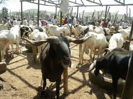 EID EL-KABIR: 600 RAMS, COWS STOLEN IN ZAMFARA