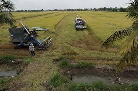 Thailand edging towards world's top rice exporter