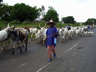 Opinion: Ruga and the Fulani agenda,  By FANI-KAYODE