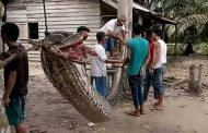 Man fights and kills 23ft reticulated python which left him with horror injuries