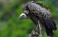 How a vulture caused motorcycle crash that killed couple