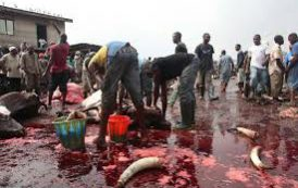 Veterinary council tasks AMAC on monthly decontamination of livestock markets, abattoirs