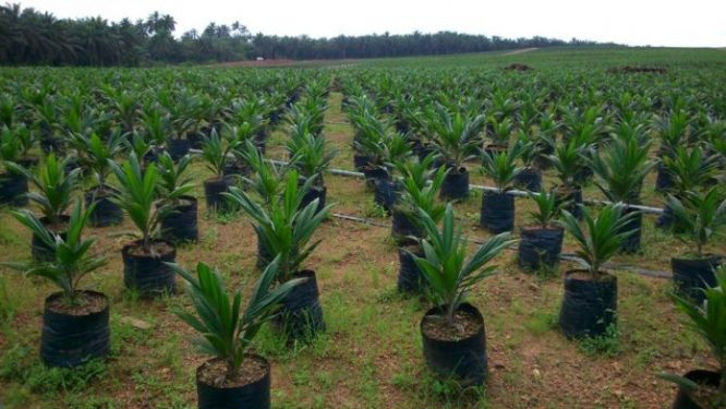 Jigawa Govt plants 2.5m tree seedlings