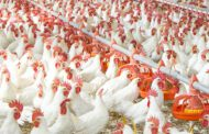 Grains exportation: Poultry industry to shut down by Jan, says PAN