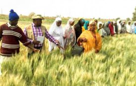 FCTA sensitises farmers to resilient agriculture, food security systems